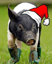 Pig in Boots Radio Christmas Story